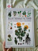 Лекарственные растения. Энциклопедия — фото, картинка — 3